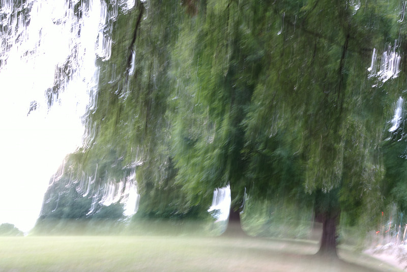 July 31 2014   Impression of trees