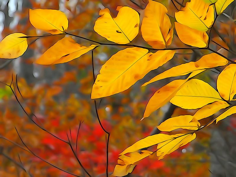 November 1 2012    Painted Leaves