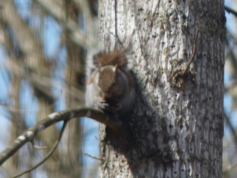 March 21 2013  Squirrel Through Glass