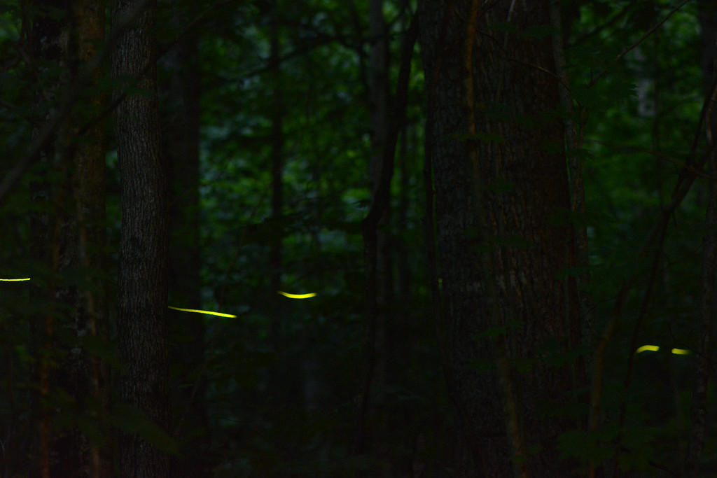 July 31 2013   Firefly Trail