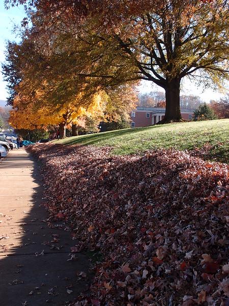 November 5 2012   Leaf Harvest