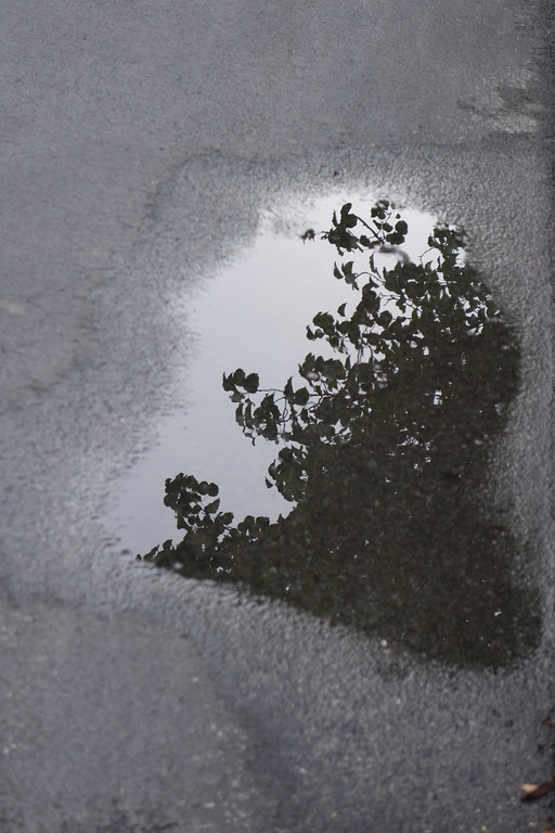 May 27 2014  Tree in a puddle