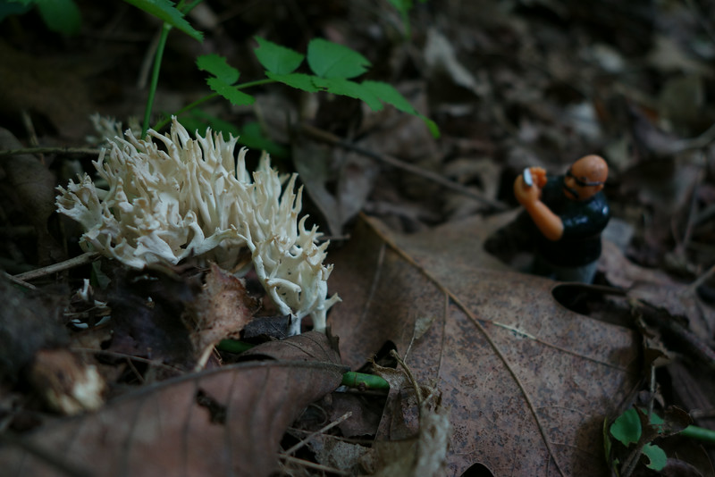 July 14 2014  Ben loved photographing the fungus that always came up after summer rains.