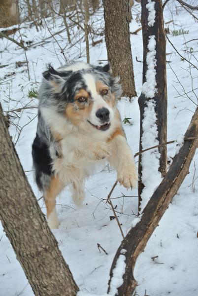 February 4 2013   Superdog!