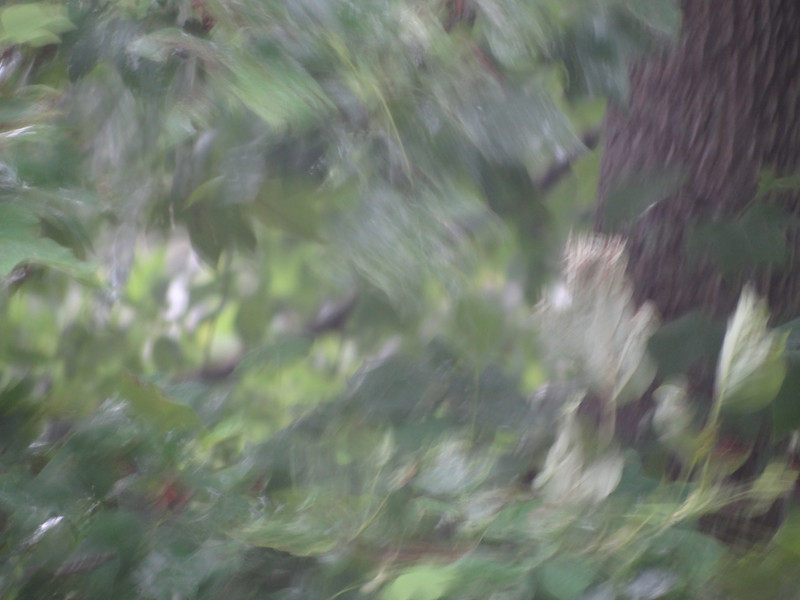 June 26 2011   Windswept rain