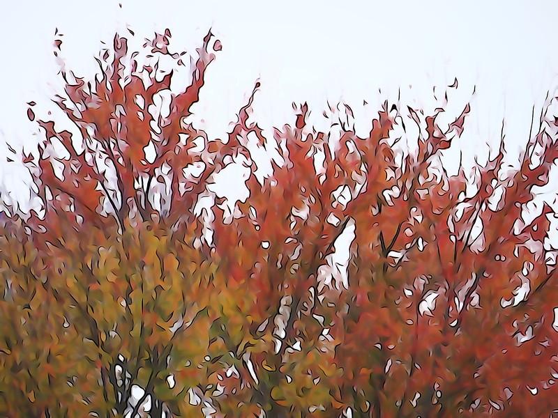 October 30 2012   Tree Fire