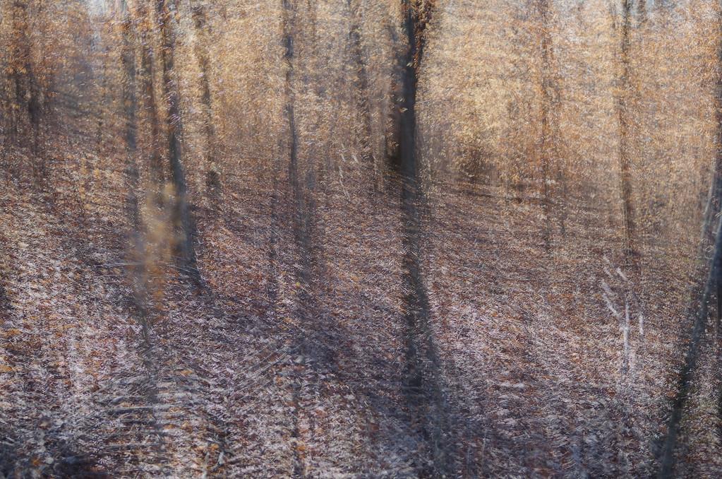 January 28 2013   Muted Beech Woods Palette