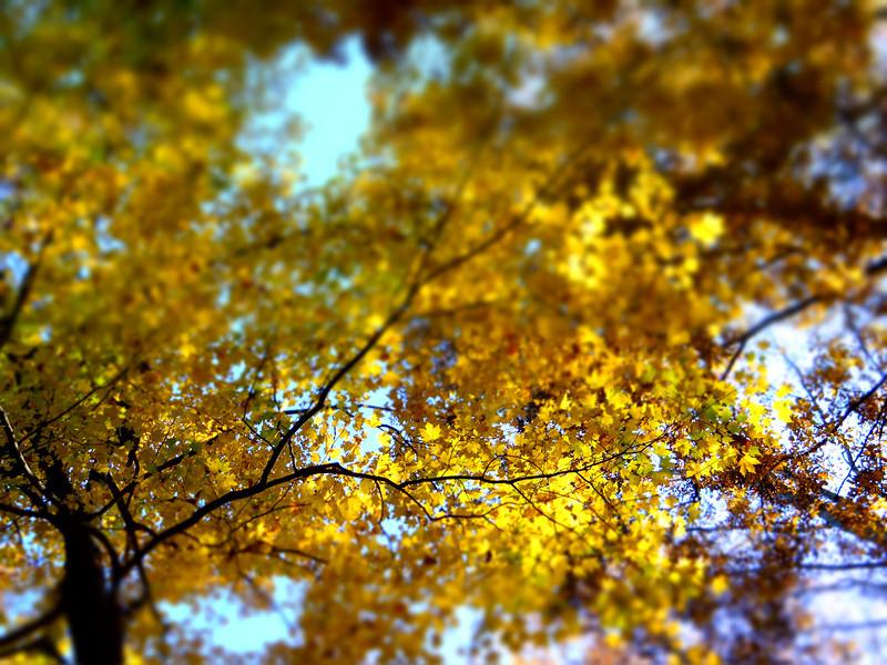 October 22 2012   Grasping Branch