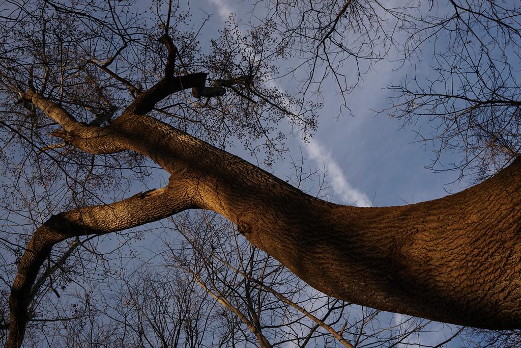 December 7 2014  Curving tree