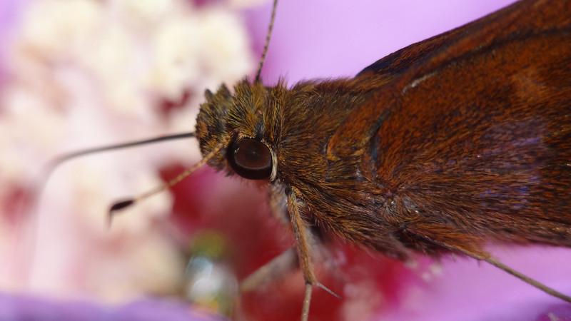 August 24 2011  Fuzzy butterfly