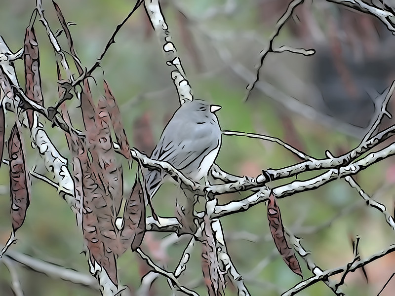 October 29 2012   Junco Journey