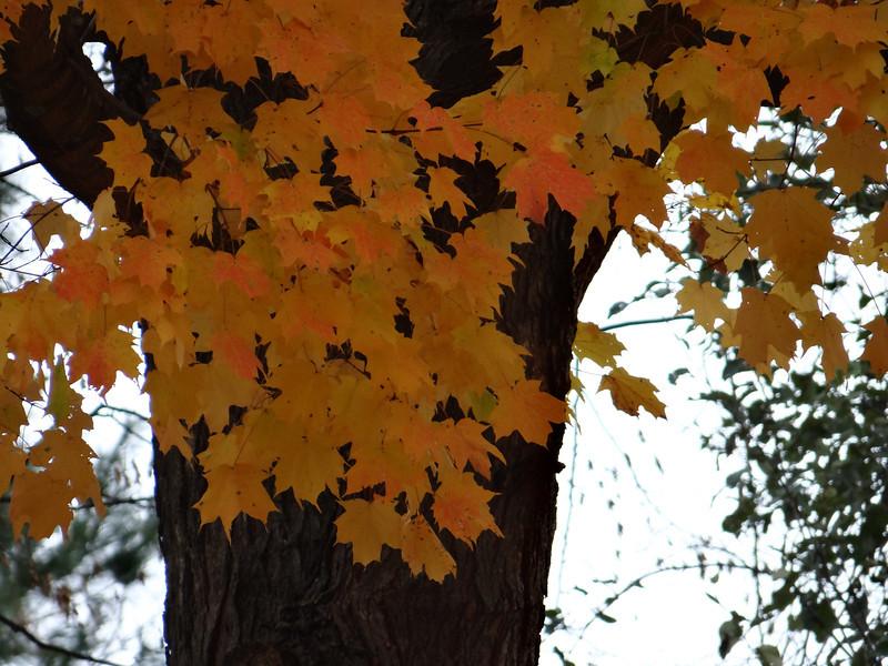 October 31 2012   Tree Halloween