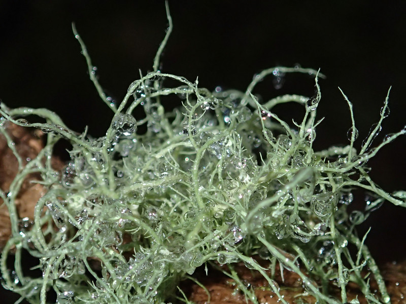 March 17 2014   Ice coated lichen