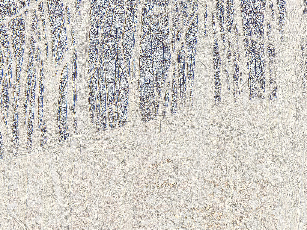 February 10 2013   Etched Forest