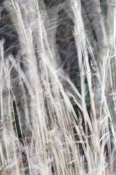 February 5 2014   Wind blown grass