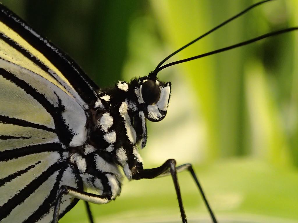 December 22 2013  Paper kite butterfly