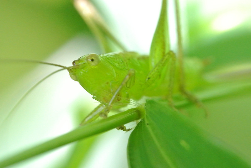 August 22 2013   Curious Grasshopper