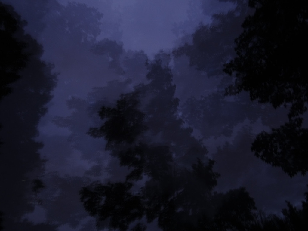 July 17 2011  Twilight forest