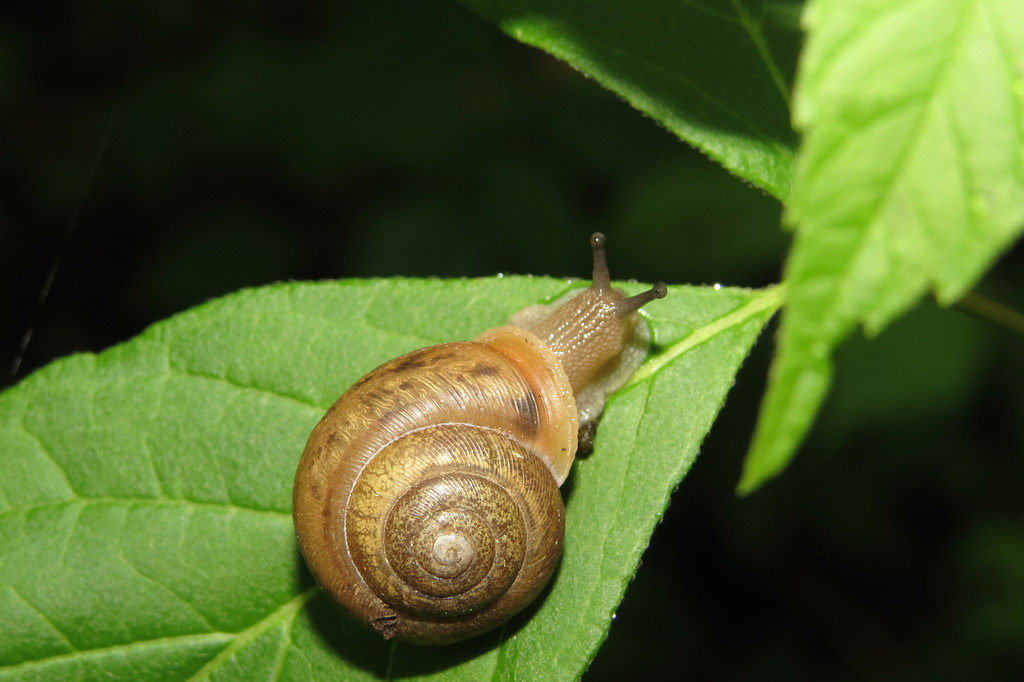 May 13 2014   Snail commute