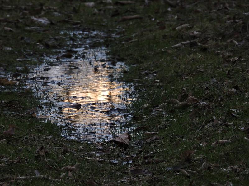 February 2 2015  Sun puddle