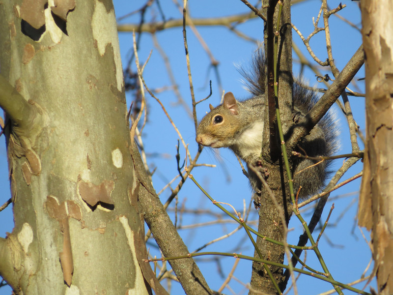 November 13 2013   Cheeky squirrel