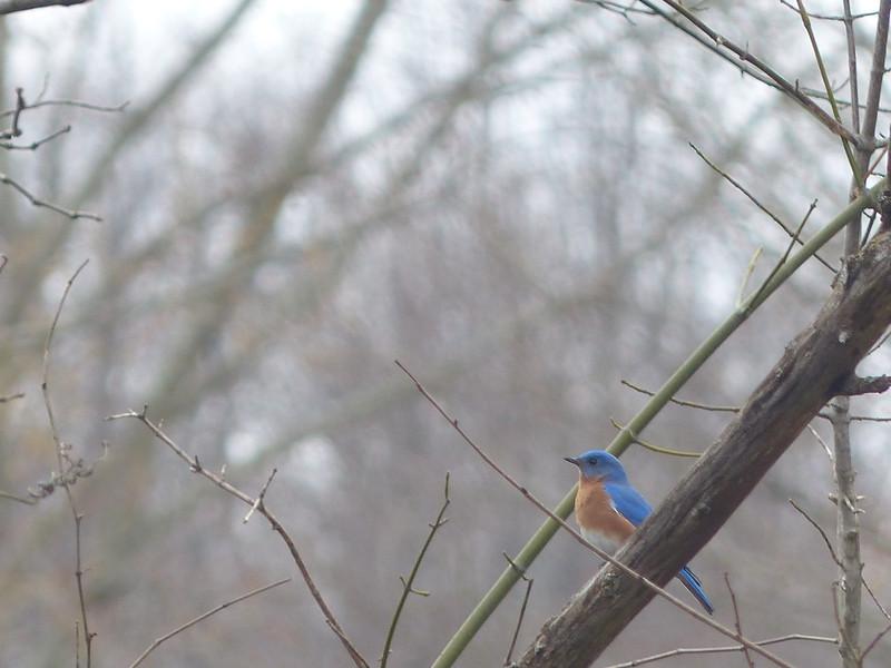 February 22 2013   Bluebird Winter