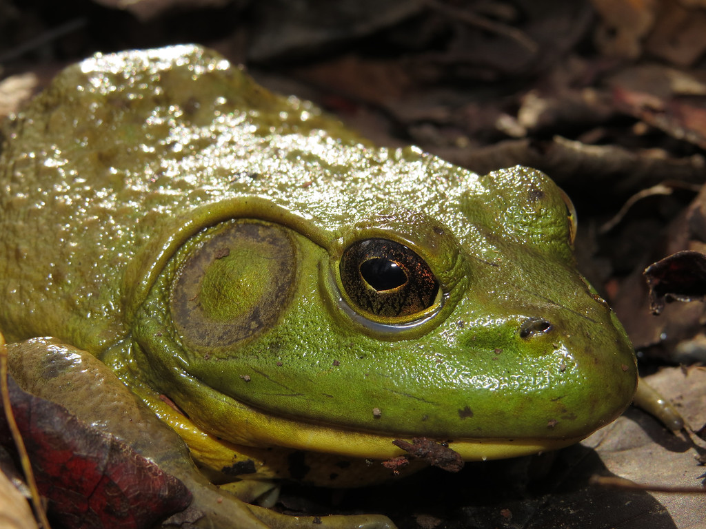 November 4 2013   Bullfrog attitude