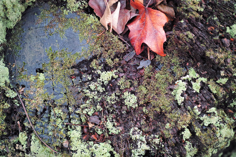 December 7 2013   Mossy stump