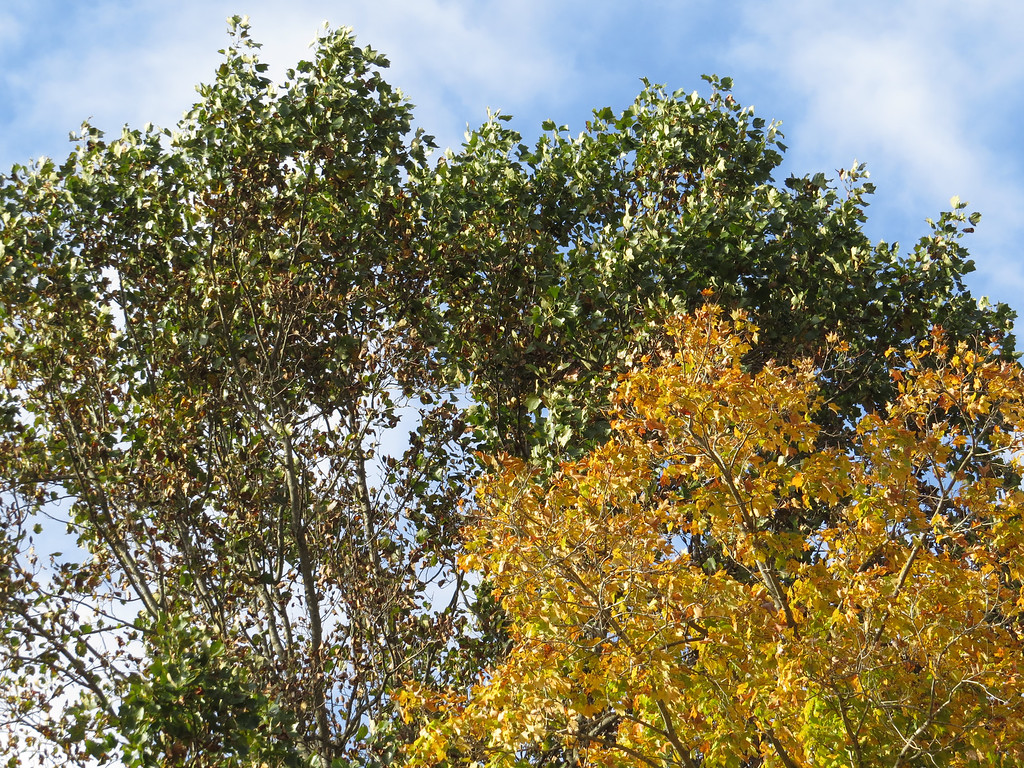 October 28 2013   Autumn afternoon