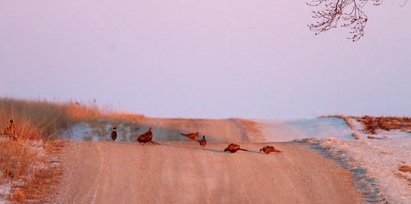 Neal Smith National Wildlife Refuge NWR Prairie City IA  IMG_2454