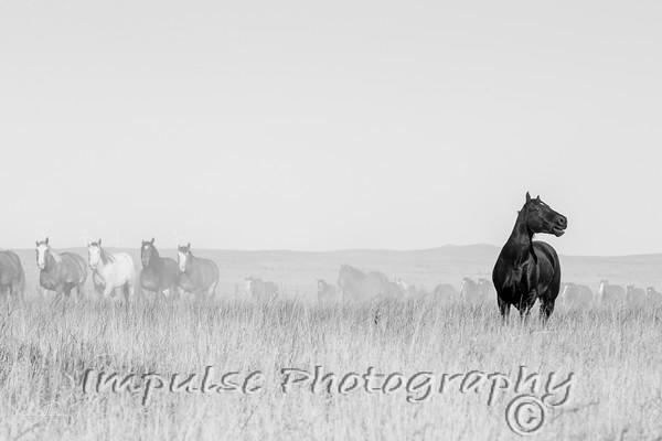cervi nfr horses 2014-7812