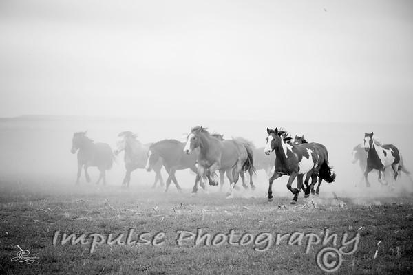 cervi chase-3164