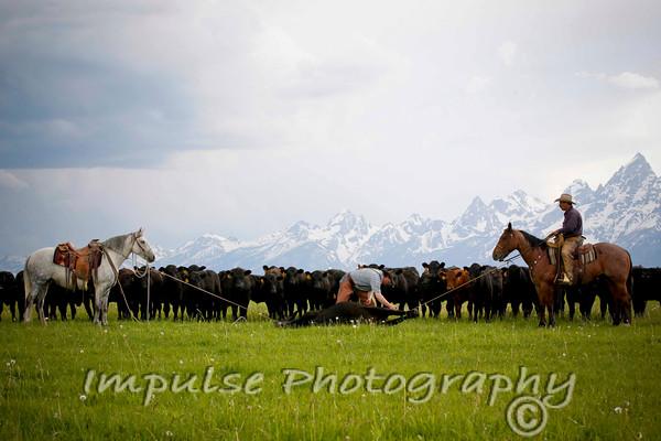 westernhorseman2012-0338