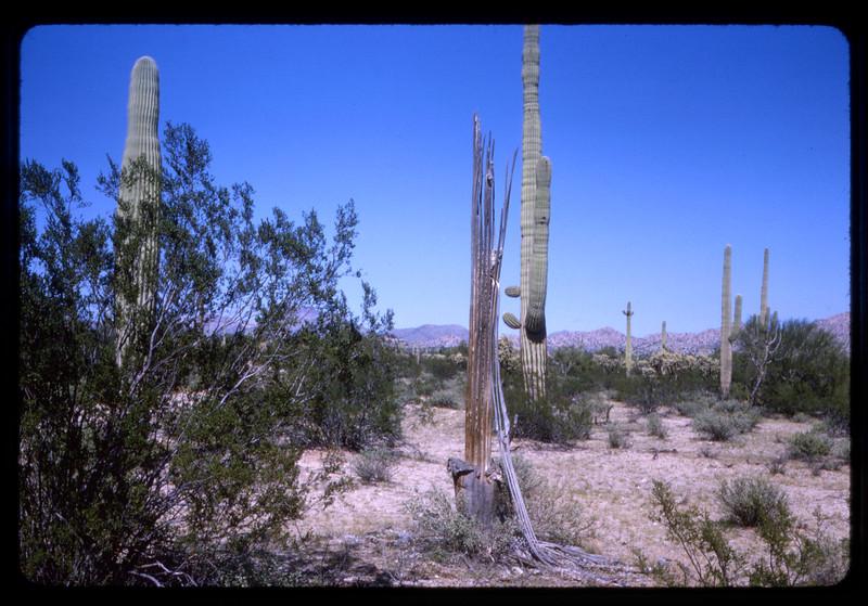 1962 -1964 Western Trip006.jpg