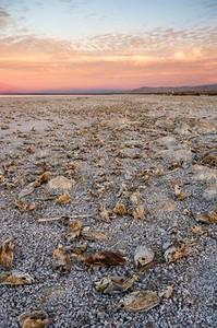 Dead tilapia at the Salton Sea, California