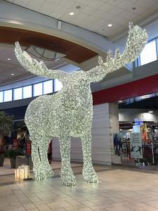 Mall Moose