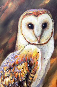Owl Street Art