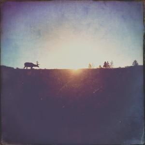 iPhone - Wyoming and Montana Summer 2106
