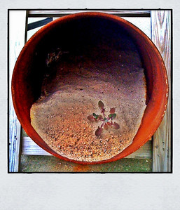 Sand, weed, rust 7/1/2010 iPhone 3G