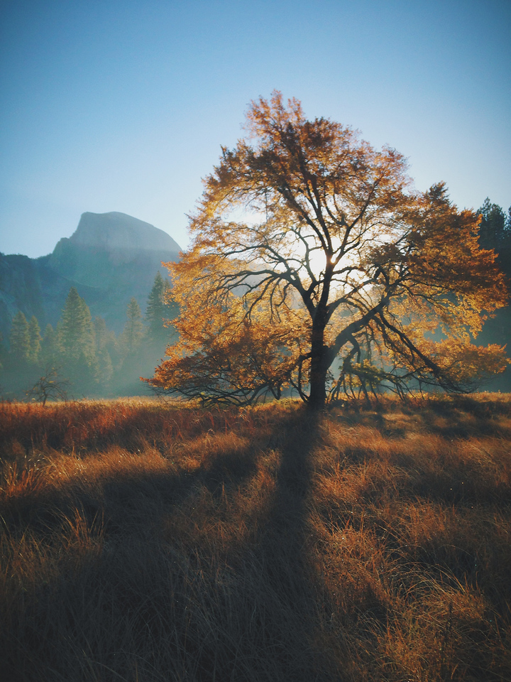 Autumn Morning, Half Dome, and an Elm Tree. Processed with VSCOcam with c3 preset
