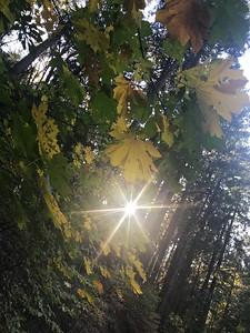 Gracie Ditch trail light