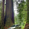 Parking between the redwoods.JPG