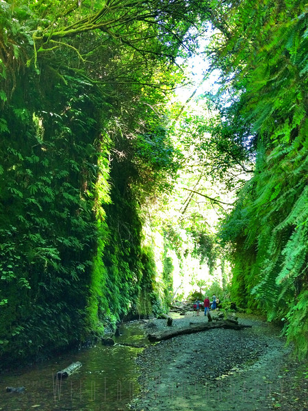 Fern Canyon - Redwood State Park - Northern California