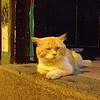 Bar Cat - Santa Ana Hill - Guayaquil