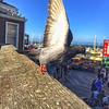 Pier 39 wildlife