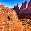 Lizard on rock Moab