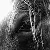 Colorado Working Horse
