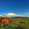 Horse feeding at Sunset