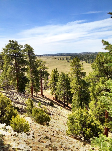Lunch time view - Carson National Forest New Mexico