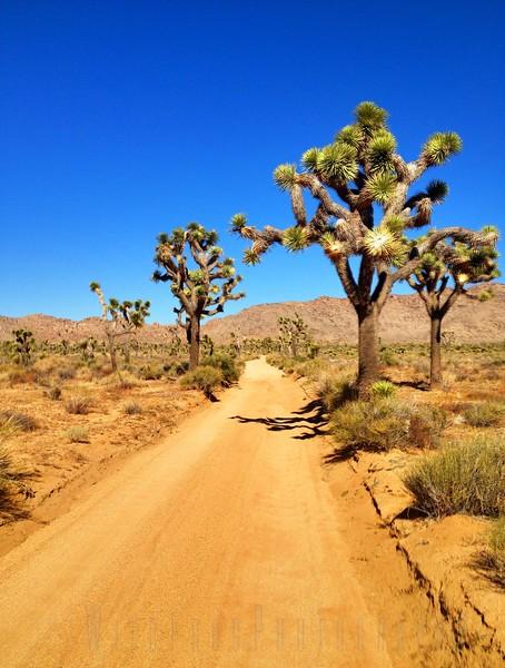 Joshua Tree National Park Southern California